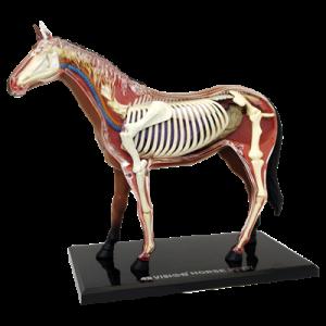 Анатомическая модель Лошадь, 26 деталей