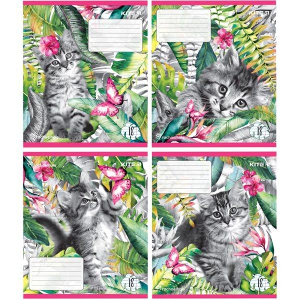 Тетрадь школьная Kite Rachael Hale, 18 листов, линия R19-237