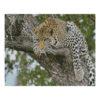Алмазная мозаика Strateg «Леопард на дереве», 40х50 см