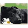 Картина для росписи по номерам «Черный щенок», 40х50см