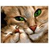 Картина для росписи по номерам «Кошка с котенком», 40х50см