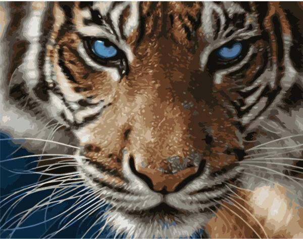 Картина для росписи по номерам «Голубоглазый тигр», 40х50см